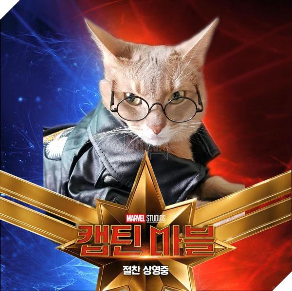 Sau Captain Marvel thì mèo Goose đang trở thành hiện tượng của cộng đồng mạng 13