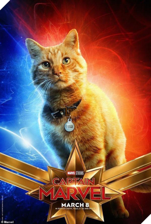 Sau Captain Marvel thì mèo Goose đang trở thành hiện tượng của cộng đồng mạng