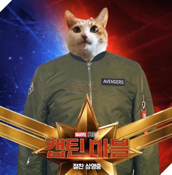 Sau Captain Marvel thì mèo Goose đang trở thành hiện tượng của cộng đồng mạng 2