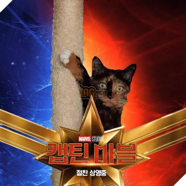 Sau Captain Marvel thì mèo Goose đang trở thành hiện tượng của cộng đồng mạng 4