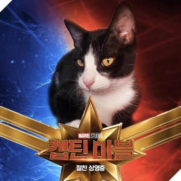 Sau Captain Marvel thì mèo Goose đang trở thành hiện tượng của cộng đồng mạng 5