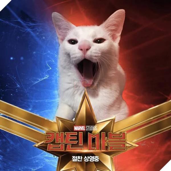 Sau Captain Marvel thì mèo Goose đang trở thành hiện tượng của cộng đồng mạng 6