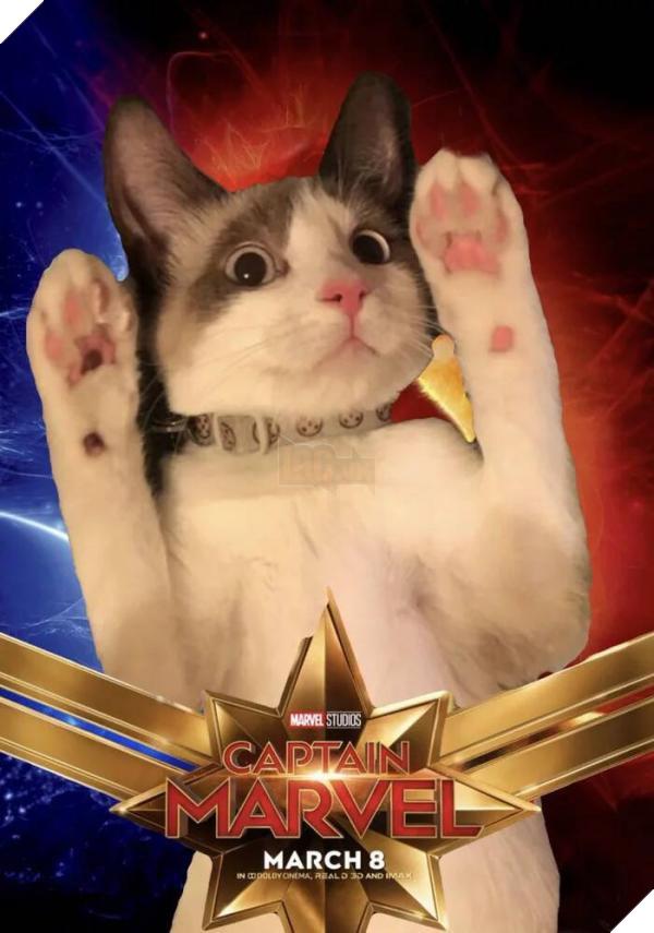 Sau Captain Marvel thì mèo Goose đang trở thành hiện tượng của cộng đồng mạng 7