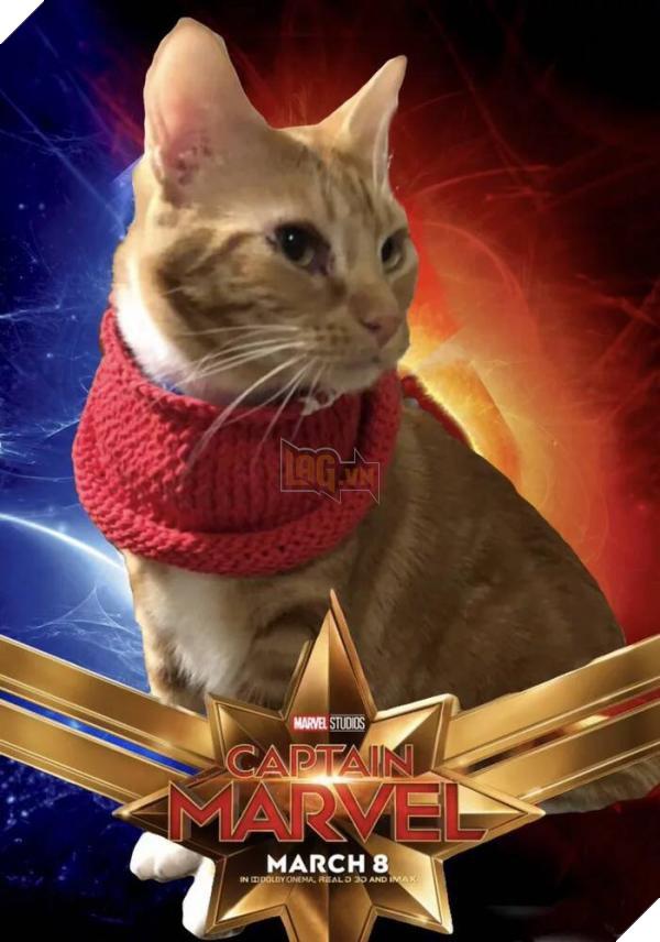 Sau Captain Marvel thì mèo Goose đang trở thành hiện tượng của cộng đồng mạng 8