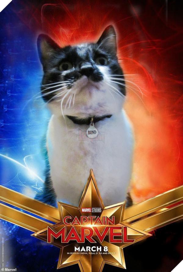Sau Captain Marvel thì mèo Goose đang trở thành hiện tượng của cộng đồng mạng 10