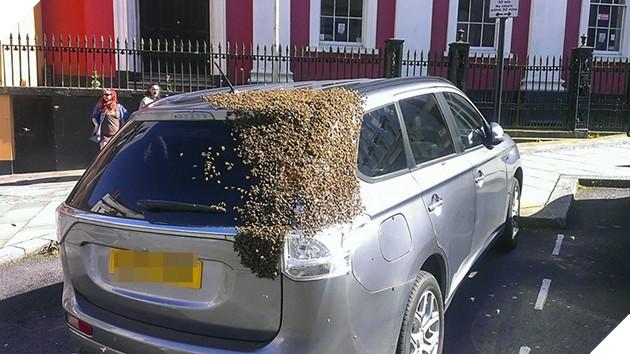 Chiếc xe của cụ Carol bị nguyên một bầy ong 20.000 con vây kín trong lúc cụ đỗ xe đi mua sắm.