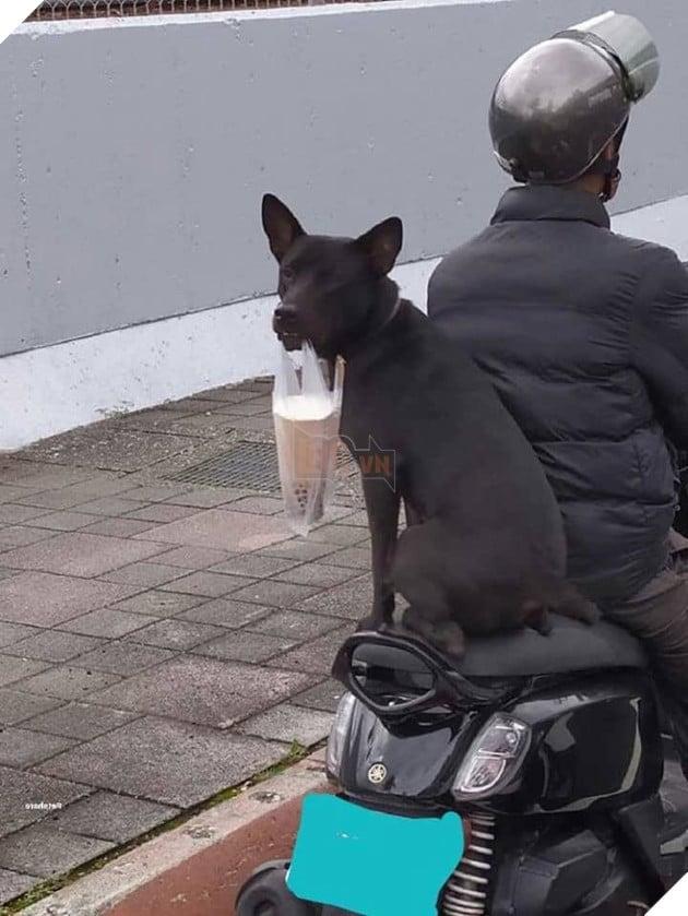 Chú chó giúp chủ đi ship trà sữa: Đúng chó nhà người ta không bao giờ làm bạn thất vọng! 2