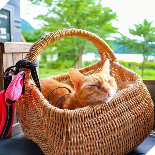 nằm mơ thấy mèo cắn