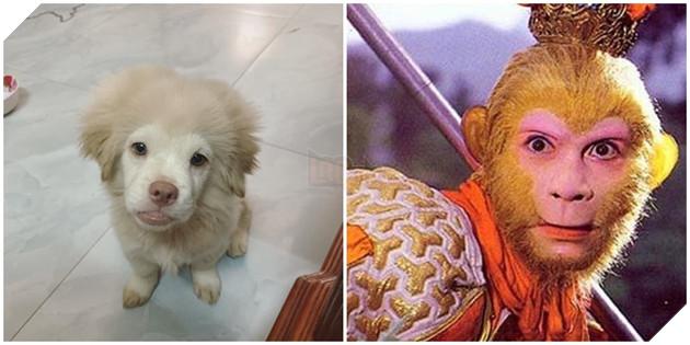 Có khi nàotề thiên độ kiếp cho chú chó này không?