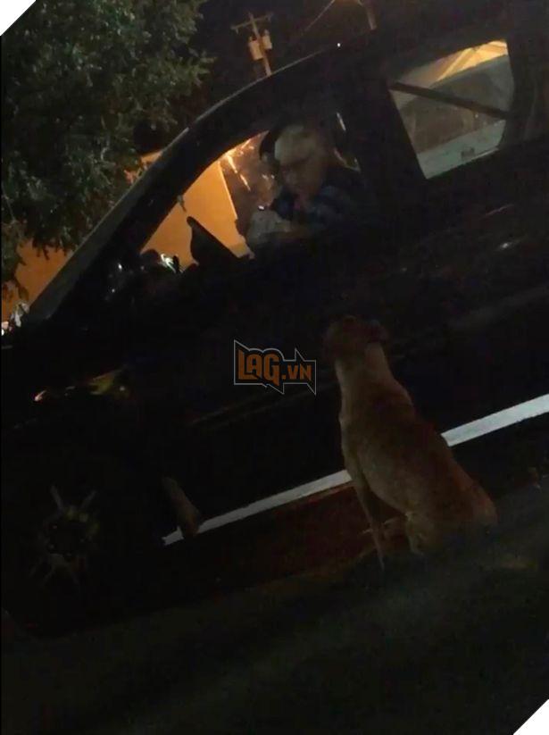 Bé chó béo ú giả bộ đáng thương để xin ăn ngay trước McDonald, cô chủ phải than trời 3