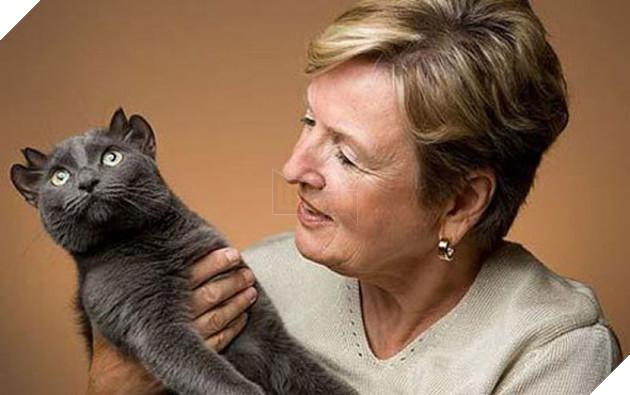 Bé mèo 4 tai cực ngộ nghĩnh và đáng yêu đốn tim cộng đồng mạng 2
