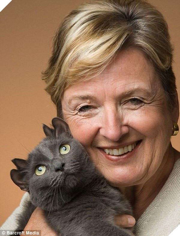 Bé mèo 4 tai cực ngộ nghĩnh và đáng yêu đốn tim cộng đồng mạng 5