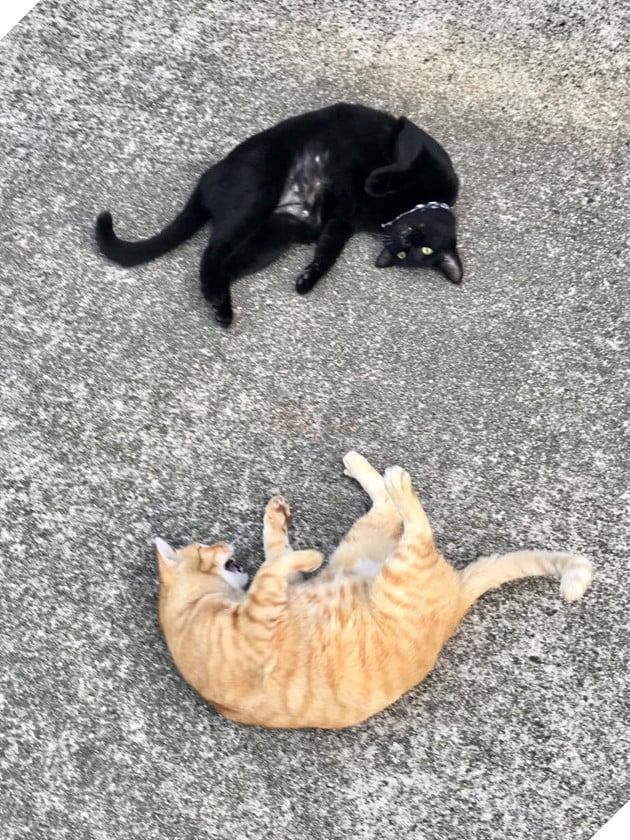 2 con mèo tìm mọi cách lẻn vào viện bảo tàng trong suốt 2 năm chỉ vì mê… 2