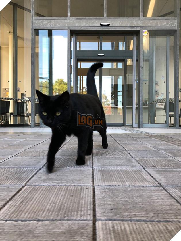 2 con mèo tìm mọi cách lẻn vào viện bảo tàng trong suốt 2 năm chỉ vì mê…