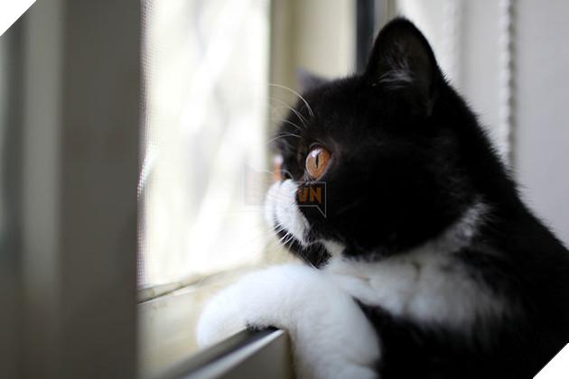 Lũ mèo sẽ cảm thấy bị bỏ rơi nếu bạn ra khỏi nhà mà không nói gì với chúng 2