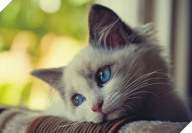 Lũ mèo sẽ cảm thấy bị bỏ rơi nếu bạn ra khỏi nhà mà không nói gì với chúng 3