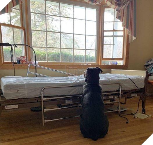 Moose vẫn kiên nhẫn ngồi chờ ông chủ mỗi ngày