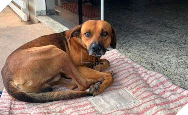 Hình ảnh chú chó chờ ngừoi chủ vô gia cư ra viện trong vô vọng