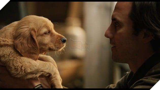 Cuộc đời phi thường của chú chó Enzo: Cuộc đời sẽ ra sao nếu được nhìn qua ánh mắt của một chú chó? 2