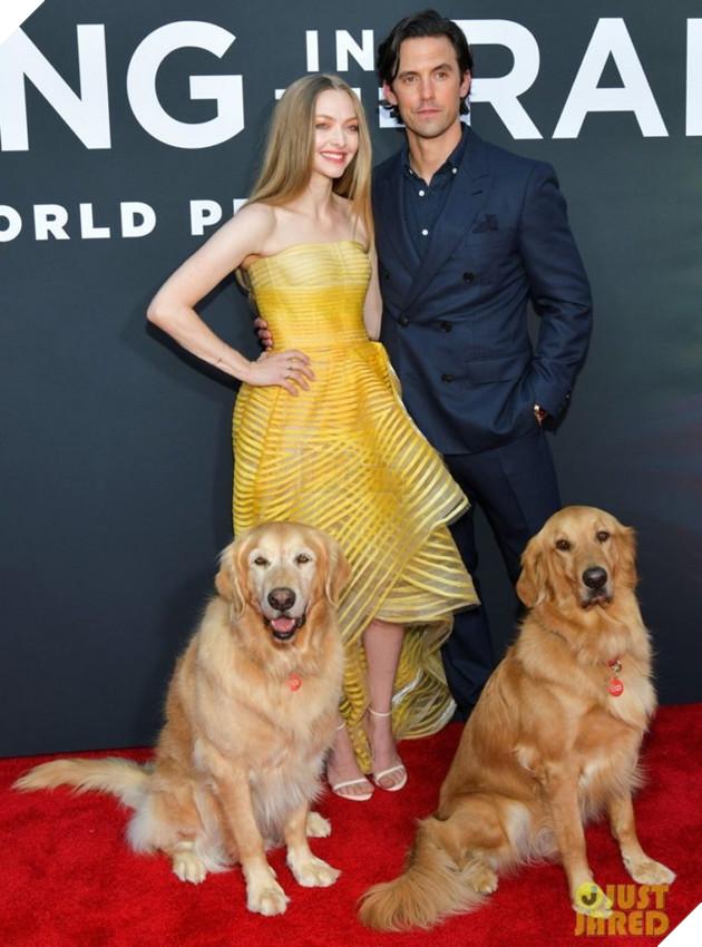 Cuộc đời phi thường của chú chó Enzo: Cuộc đời sẽ ra sao nếu được nhìn qua ánh mắt của một chú chó? 5