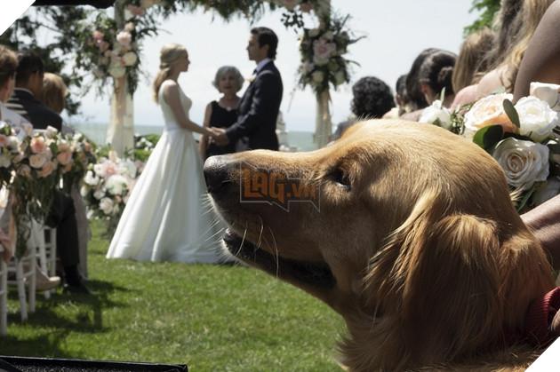 Cuộc đời phi thường của chú chó Enzo: Cuộc đời sẽ ra sao nếu được nhìn qua ánh mắt của một chú chó? 3