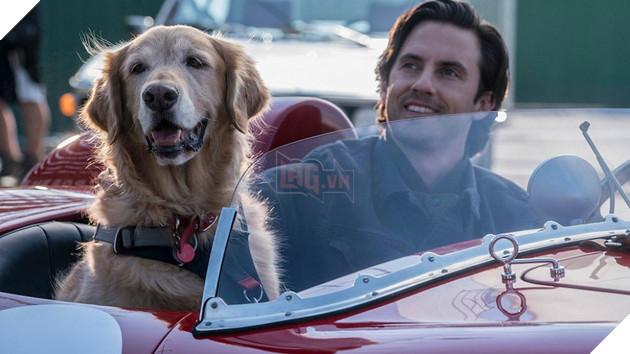 Cuộc đời phi thường của chú chó Enzo: Cuộc đời sẽ ra sao nếu được nhìn qua ánh mắt của một chú chó? 4
