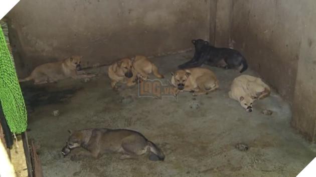 Căn hầm ẩm thấp nơi những chú chó bị giam lỏng trong thời gian chờ đến lò mổ tại Thanh Hóa.