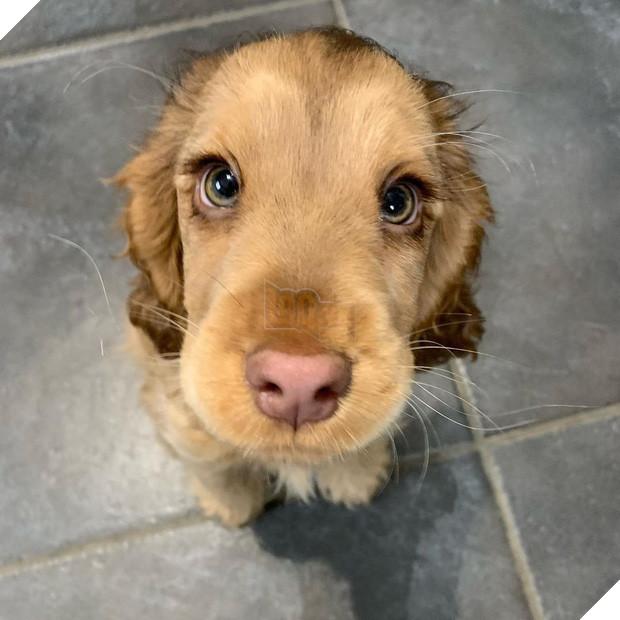 Nàng cún con với đôi mắt biếc khiến cư dân mạng phát cuồng dịp đầu năm - Ảnh 1.