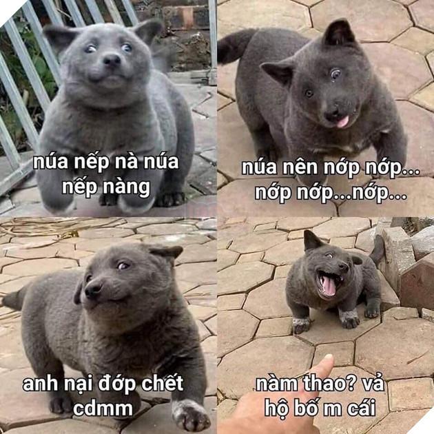 Nguyễn Văn Dúi nổi như cồn trên mạng xã hội(Ảnh: Gấu mèo Bắc Mĩ)