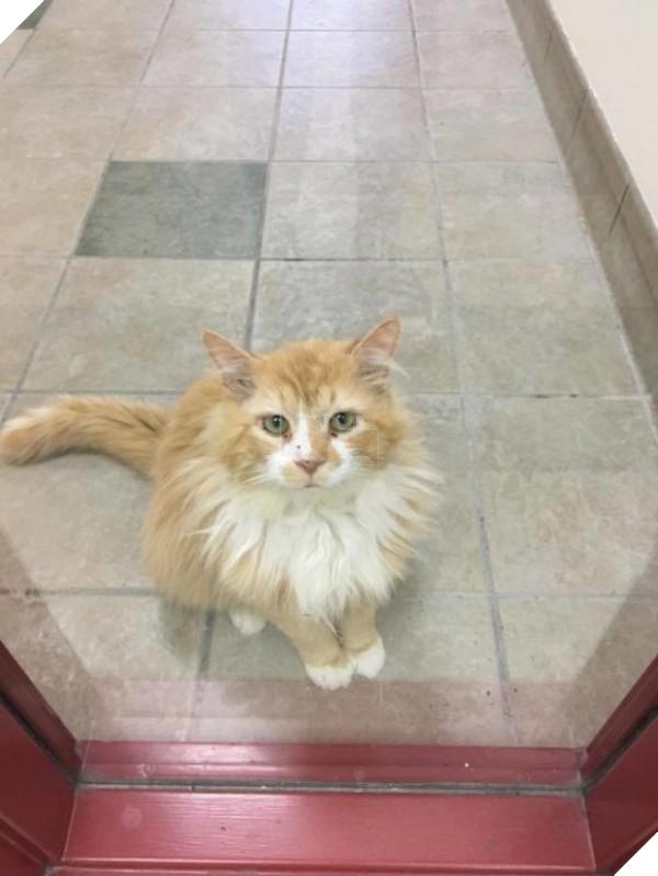 Chú mèo Toby