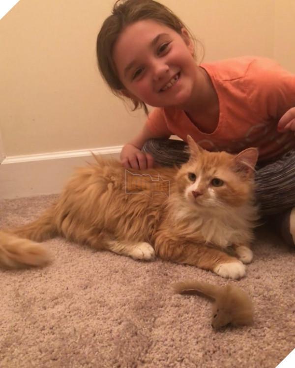 Bị đem cho, chú mèo vượt 12 km tìm về với chủ cũ để rồi bị ruồng bỏ lần 2 còn đau lòng hơn 5