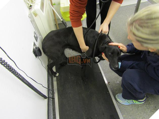 Bảy chú chó đã được đưa đến trung tâm động vật quốc gia ISPCA ở quận Longford để điều trị thú y khẩn cấp.
