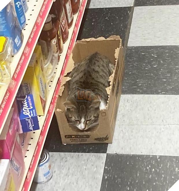 Tuyển tập những chú mèo chăm chỉ ngồi trông hàng và sở hữu phong thái như thể chính chúng nó mới là ông chủ - Ảnh 14.