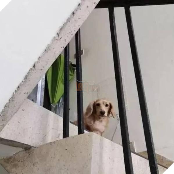 Ánh mắt đầy yêu thương của chú chó. (Ảnh: Weibo)
