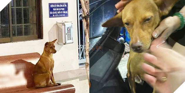 Cô chó ngồi trước cửa đồn công an chờ chủ.