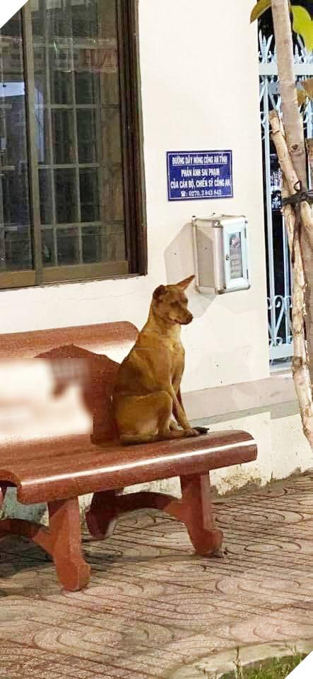 """Cô chó với """"nội tâm đau khổ"""" đang chờ chủ đến đón.(Ảnh: Đặng Lam)"""