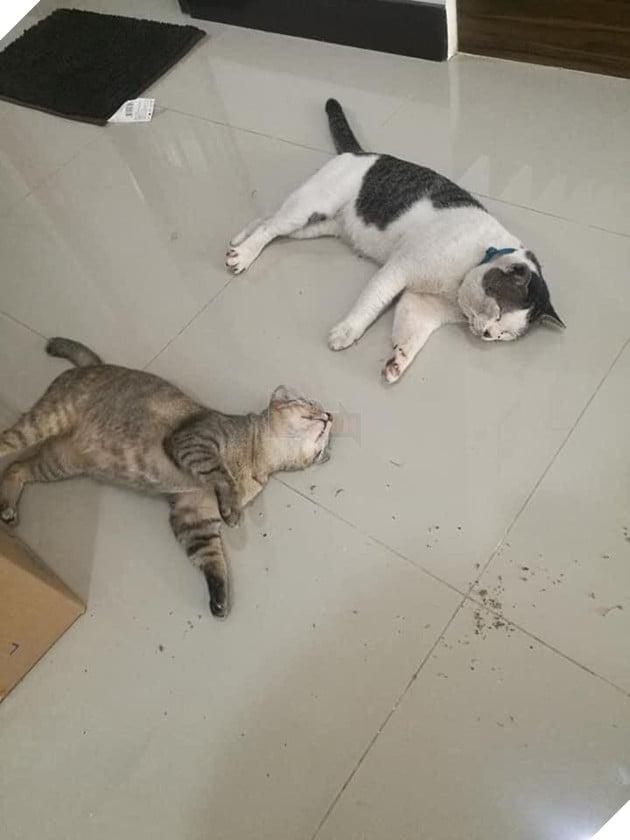 """Con mèo ɡіаnɡ hồ, sau khi bỏ nhà ra đi hơn 5 ngày liền quay trở về với vợ và 3 đứa con, CĐM nghi """"đổ vỏ"""" cao 3"""