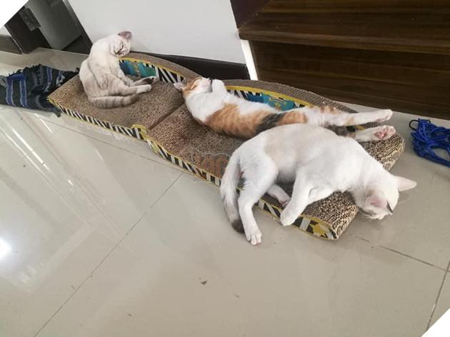 """Con mèo ɡіаnɡ hồ, sau khi bỏ nhà ra đi hơn 5 ngày liền quay trở về với vợ và 3 đứa con, CĐM nghi """"đổ vỏ"""" cao 5"""