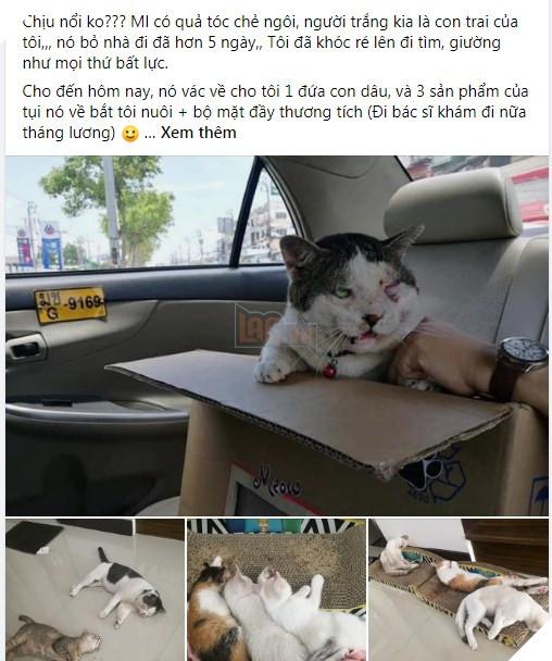 """Con mèo ɡіаnɡ hồ, sau khi bỏ nhà ra đi hơn 5 ngày liền quay trở về với vợ và 3 đứa con, CĐM nghi """"đổ vỏ"""" cao"""