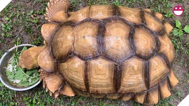 Chú rùa bỏ đi phượt suốt hơn 3 tháng được tìm thấy cách nhà tận 200 mét