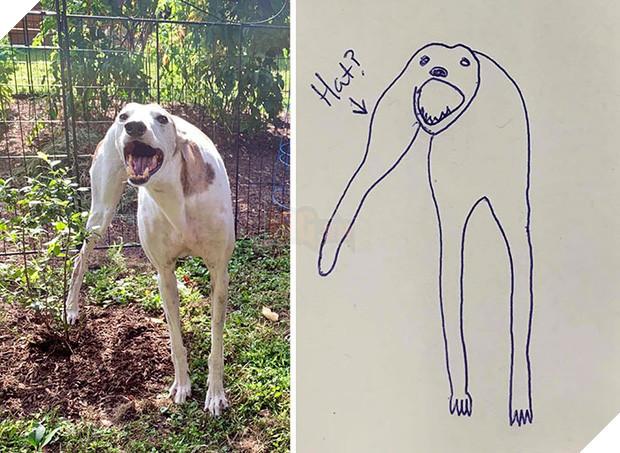 Bức tranh cún ngáo bất ngờ đánh bại mọi đối thủ nặng kí, giật giải quán quân trong cuộc thi vẽ chó - Ảnh 3.