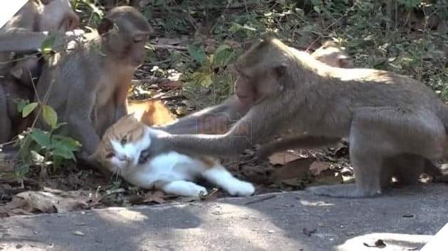 2 con khỉ bóp cổ con mèo