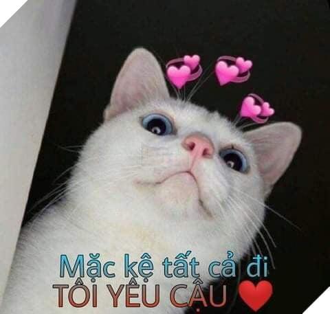 Ảnh mèo mặc kệ tất cả đi tớ yêu cậu