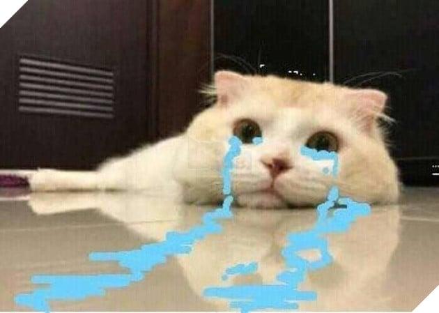 Chú mèo trắng khóc nước mắt tràn ra sàn nhà