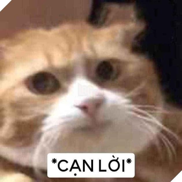Chú mèo vàng bất lực nói cạn lời