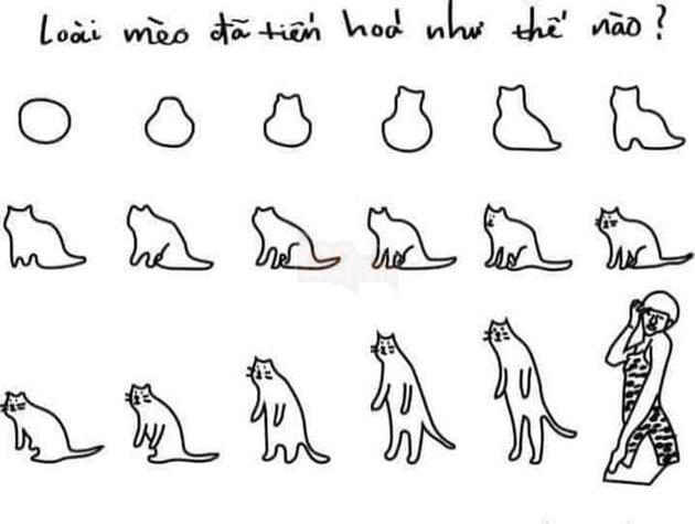 Loài mèo đã tiến hóa như thế nào? Tiến hóa thành Trần Đức Bo