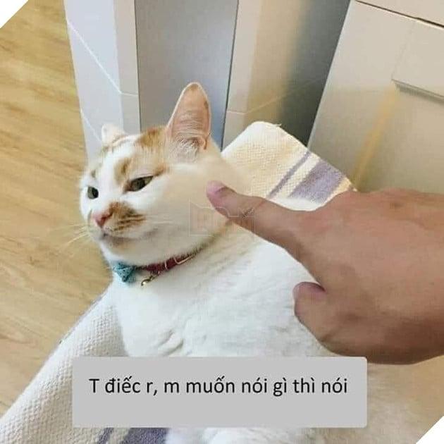 Mèo bị chỉ vào mặt tao điếc rồi, mày muốn nói gì thì nói