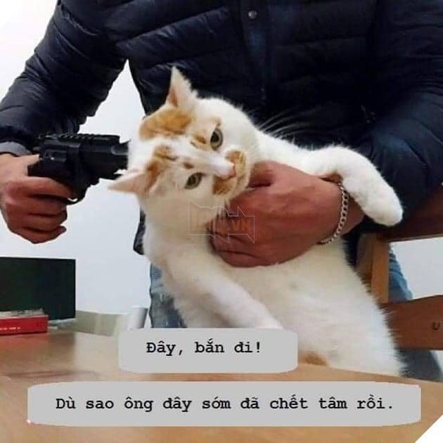 Mèo bị súng chĩa vào đầu nhưng vẻ mặt không quan tâm