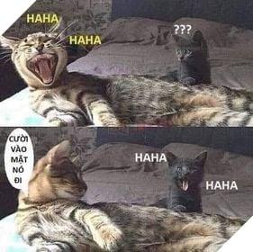 Mèo cười haha xong rủ bạn cười vào mặt nó đi