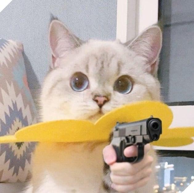 Mèo cute đeo hoa ở cổ cầm súng bắn